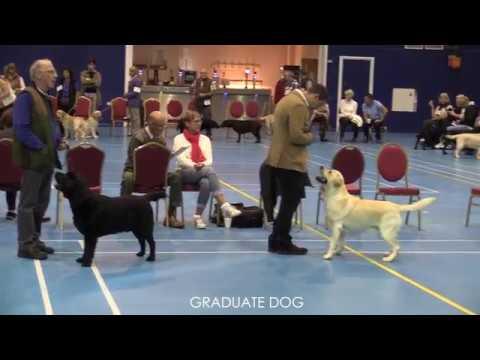 The Yellow Labrador Club 2017