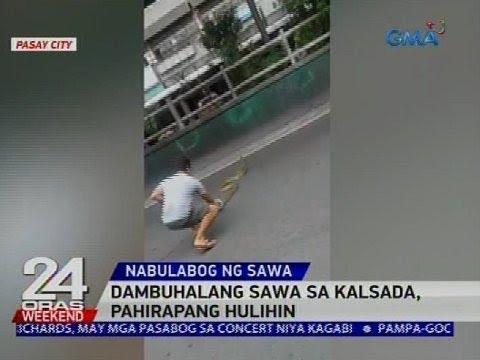 [GMA]  Dambuhalang sawa sa kalsada, pahirapang hulihin