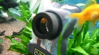 DICAPAC torbica v akvariju v Europark Maribor maj 2011 - test WP410