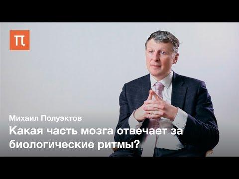 , title : 'Сон и биоритмы — Михаил Полуэктов / ПостНаука'