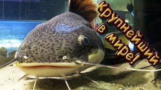 КРУПНЕЙШИЙ ЗООМАГАЗИН В МИРЕ Zoo Zajac