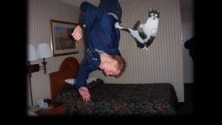 Смешные кошки :)  Часть 239 - Ничего не боятся:))