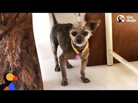 Dog's Hair Transformation Is Surreal - BENJI  | The Dodo