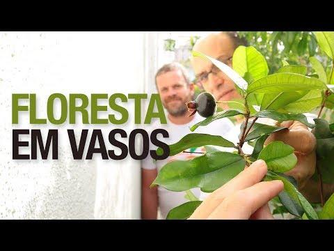 Pomar em SP com mais de 300 Frutíferas em Vaso