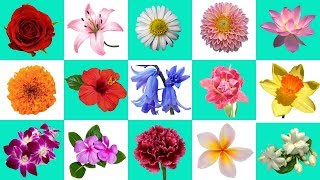 Flowers Name In English | Flowers Garden