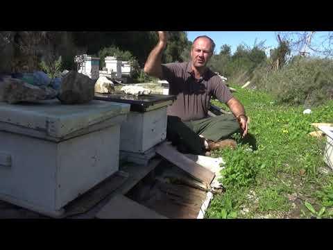 важно новичку часть 2. пчеловодство.