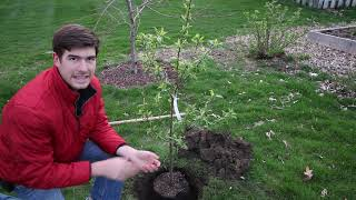 Totally Preventable Mistakes When Planting Fruit Trees