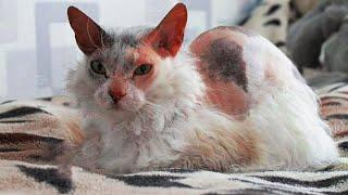 Семья взяла себе котенка, но когда он начал быстро меняться открылась удивительная правда