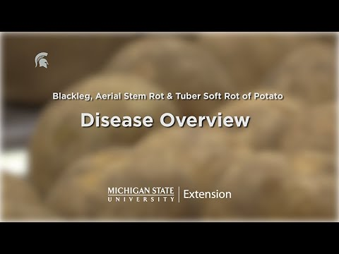 , title : 'Potato Diseases Caused by Soft Rot Bacteria