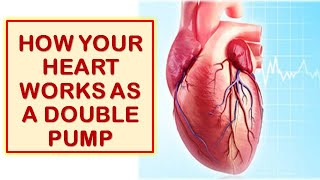 Circulatory System| How The Heart Functions as a Double pump