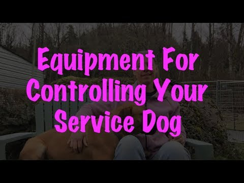 Training A Service Dog: Part 9 - Equipment
