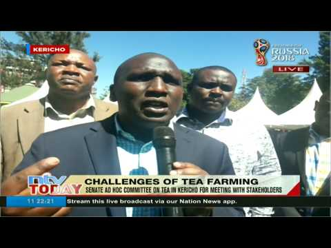 Senate ad hoc committee in Kericho for meeting with tea stakeholders
