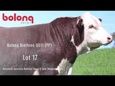 BOLONG BRETHREN Q011 (PP)