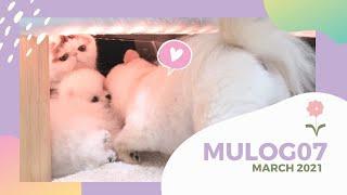 MULOG07 :  ครั้งแรกในชีวิตมูจิที่ได้เล่นกับหมา และสอนท่าใหม่น้องมาโมรุ💕