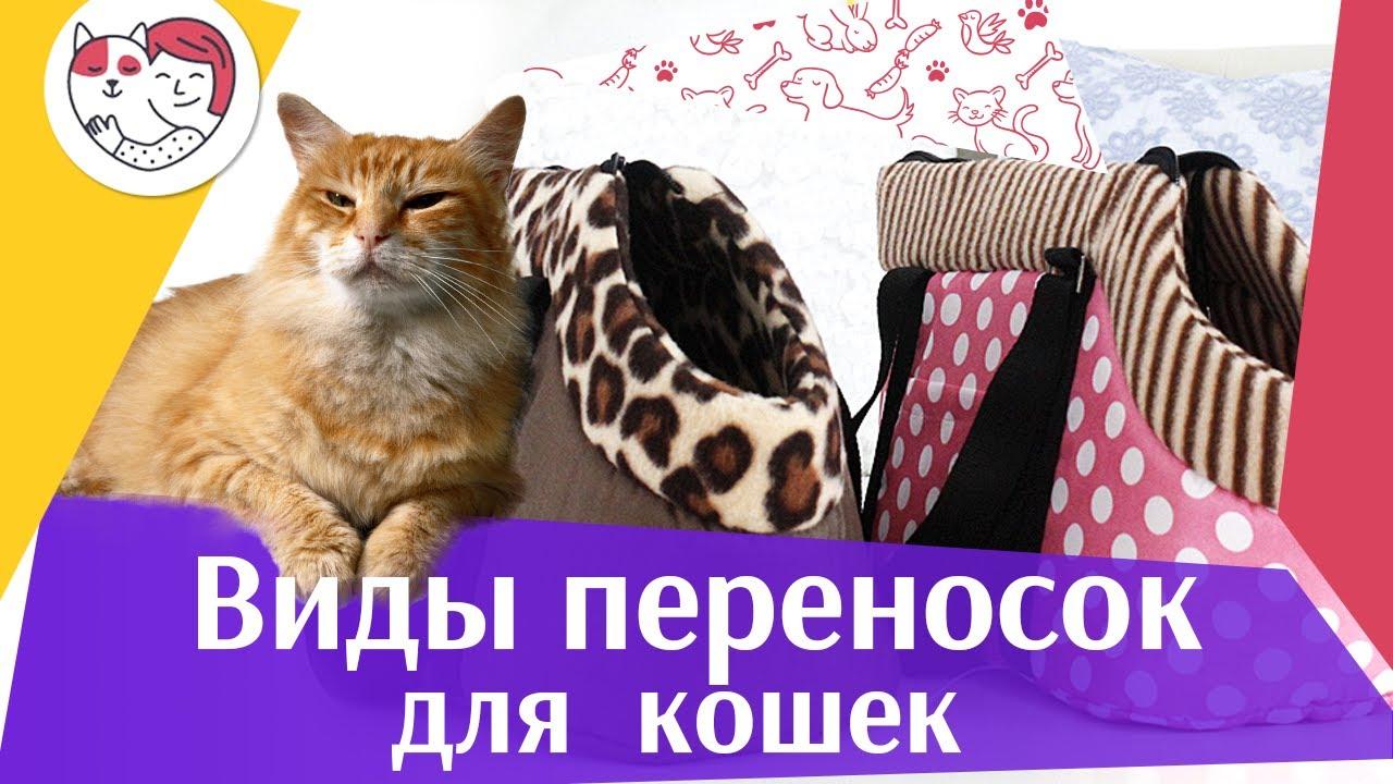 Виды переносок для кошек на ilikepet