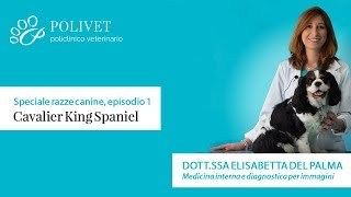 Speciale Sulle Razze Canine: Il Cavalier King Charles Spaniel