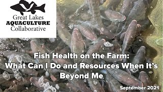 Fish Health on the Farm: What Can I Do and Resources When It's Beyond Me