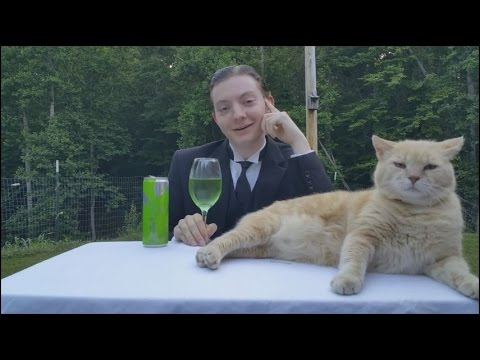 A cat makes the internets most serious food critic break character and trip over his words
