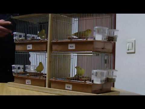 immagine di anteprima del video: Stamm Tortorelli Antonio 323 punti