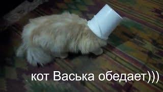 Голодный кот Васька на даче. Самое смешное