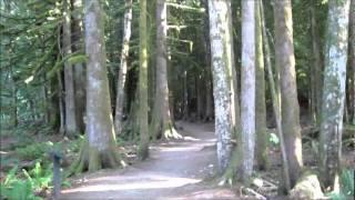 Grateful Dead - Morning Dew (Studio Version)