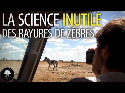 O neužitečné vědě, zebřích pruzích a Ig Nobelově ceně