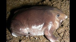 bizarre creature was discovered in India which spends most of its life underground