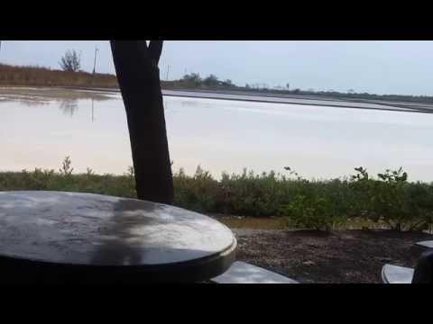 ปรสิตในวิดีโอ Bogomolov