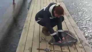 Роял фиш дубки рыбалка
