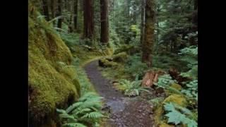 森の生活①.wmv