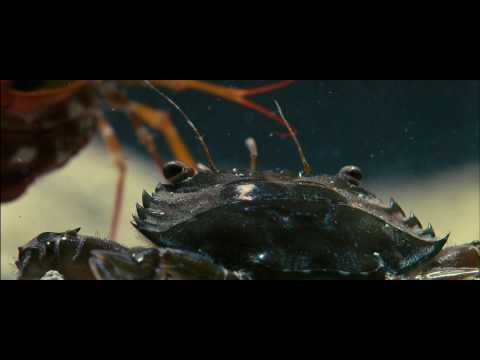 Oceans Clip 'Crab vs. Shrimp'