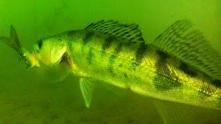 Поклевка Судака. Судачков отпустил ! :) Рыбалка. Ловля на поплавок. fishing
