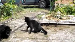 Funny Animals Humor  Pets Funny Video Clips Failarmy, Funny Cats, Bloopers 2016