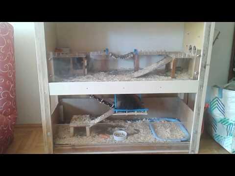Parasitiko sa Donetsk