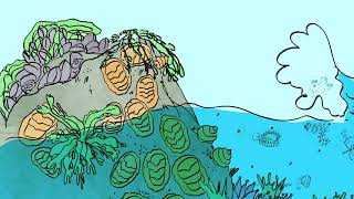 Intertidal Zone Animation