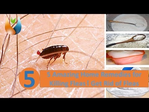 5 Amazing Home Remedies For Killing Fleas । Get Rid Of Fleas Mp3