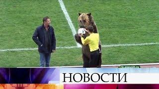 Выступление медведя Тимы из Пятигорского цирка вызвало шквал публикаций в британских СМИ.