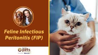 Dr. Becker Talks About Feline Infectious Peritonitis (FIP)