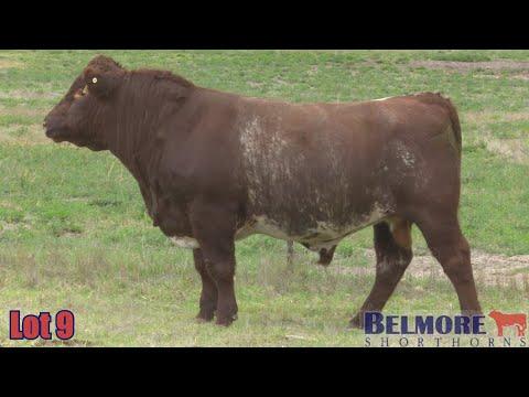 BELMORE KEEPER Q93