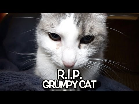 Download R. I. P.  Grumpy Cat - We'll Never Forget You. HD Mp4 3GP Video and MP3