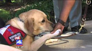 Therapy Dogs Help Vets Suffering from PTSD