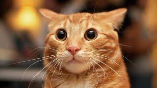 Смешные животные 2016. Подборка под хорошую музыку. #животные