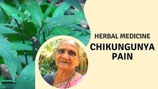 Herbal remedy for Chikungunya pain