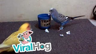 Parrots Clean up Trash || ViralHog