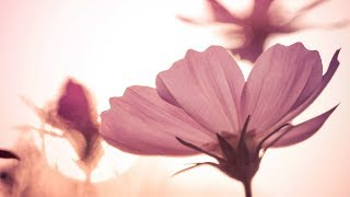 Morning Relaxing Music - Uplifting and Mindfulness (Nancy)