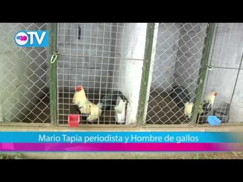 Mario Tapia periodista y Hombre de gallos