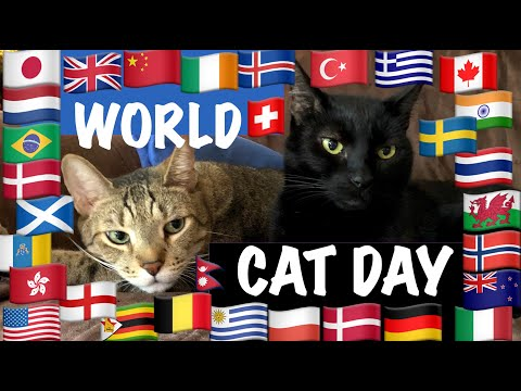 🐾 AUGUST 8th… INTERNATIONAL CAT DAY 🐾