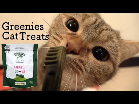 Cat be delighted at Greenies =ↀωↀ=  グリーニーズに喜ぶ猫。