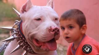 OFY - pitbull türkiye  (grup şarkısı) Full HD