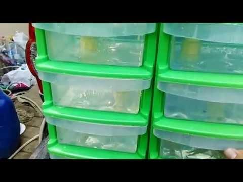 แก้ไขปรสิต intoxic ใน Karaganda